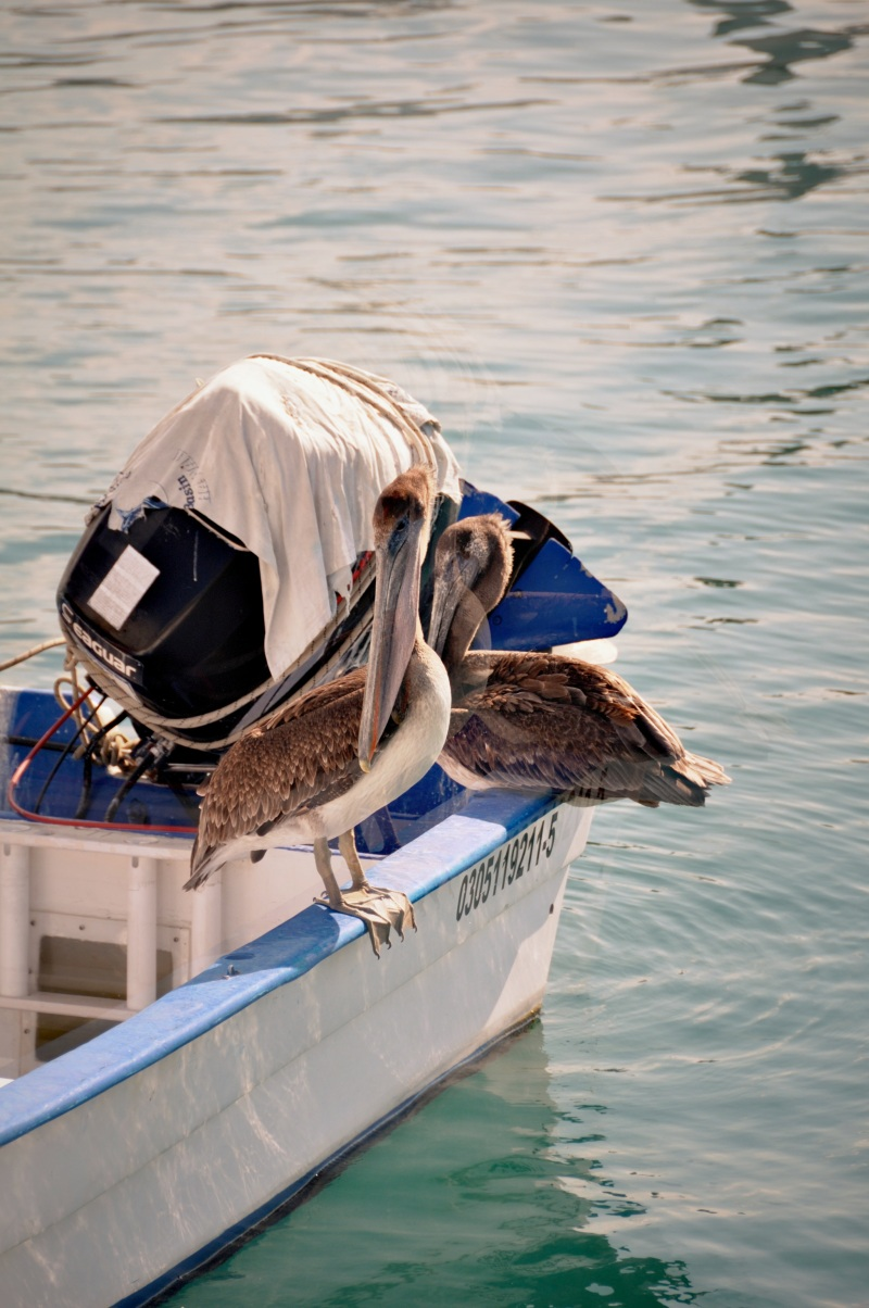 pelican_memory